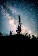 Scenic View Of Trees Against Milky Way