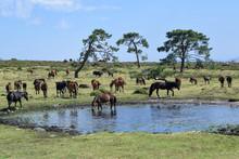 Herd Of Horses Grazing In The Meadow