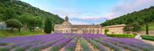 Lavender Fields In Full Bloom ...