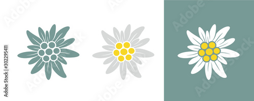 Edelweiss logo. Isolated edelweiss on white background - 302295411