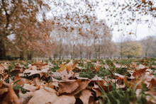 Fallen Dry Leaves Covering Gre...