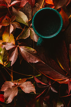 From Above Green Cup Surrounded By Autumn Colorful Leaves With Drink On Wooden Table