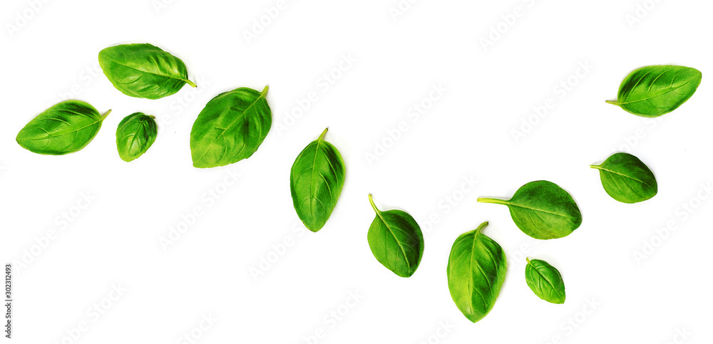 Fototapety, obrazy: Flying Fresh basil herb leaves isolated on white background. Top view. Flat lay.