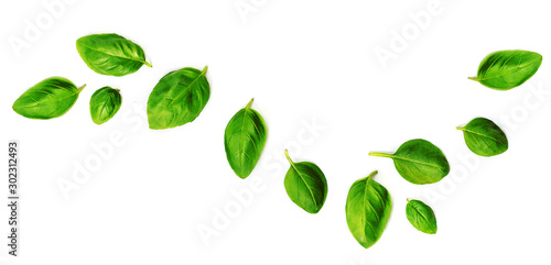 Obraz Flying Fresh basil herb leaves isolated on white background. Top view. Flat lay. - fototapety do salonu