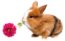 Little Rabbit Eating Flower