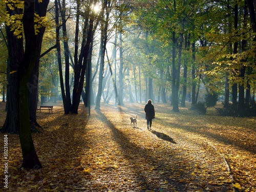 Fototapety, obrazy: spring is walking through the park