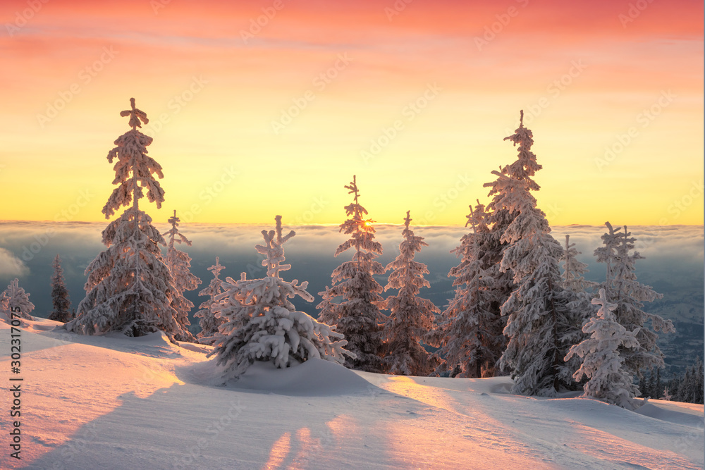 Fototapety, obrazy: Fantastic orange winter landscape in snowy mountains glowing by sunlight. Dramatic wintry scene with snowy trees. Christmas holiday background