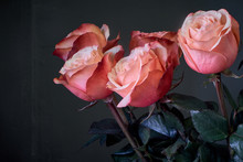 Extremely Close-up Pink Roses ...