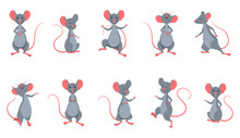 Set Rats (Mice) In Different P...