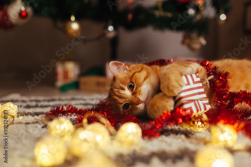 In de dag Kat Ginger cat playing with garland and gift box under Christmas tree. Christmas and New year concept