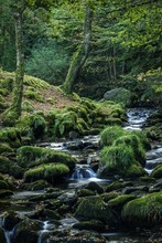 Vertical Shot Of A Beautiful Small Tributary Going Through A Forest In Wales In Summer