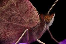 Macro Butterfly On Purple Flower