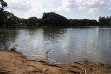 Heron At Lakeside