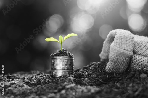 Fotografie, Obraz  The coins are stacked on the ground and the seedlings are growing on top, black and white tone