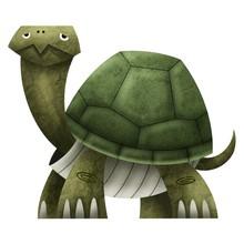 Turtle Cartoon Isolate On White Background