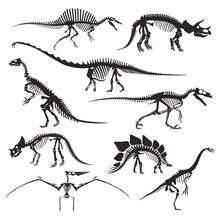 Prehistoric Animals Bones, Din...