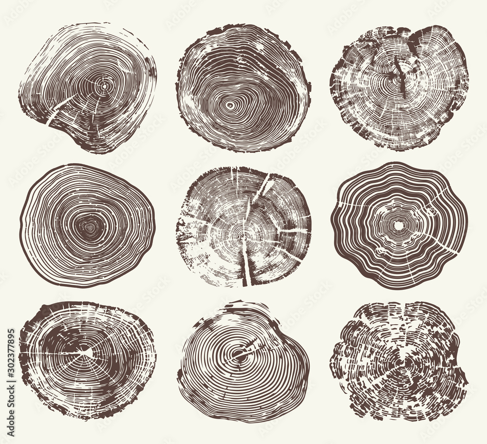 Fototapeta Wood Tree Rings Vector Set