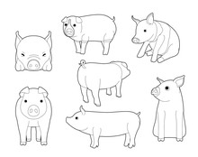 Various Domestic Pigs Cute Car...