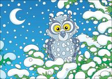Grey Owl Perched On A Snow-cov...