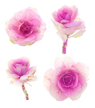 Set Of Pink Decorative Cabbage...