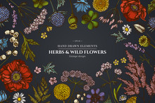 Floral Design On Dark Background With Shepherd's Purse, Heather, Fern, Wild Garlic, Clover, Globethistle, Gentiana, Astilbe, Craspedia, Lagurus, Black Caraway, Chamomile, Dandelion, Poppy Flower, Lily
