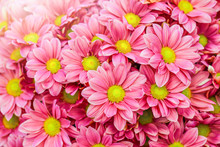 Pink And Yellow Daisies Flower...