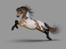 Beautiful Galloping Mustang. 3...