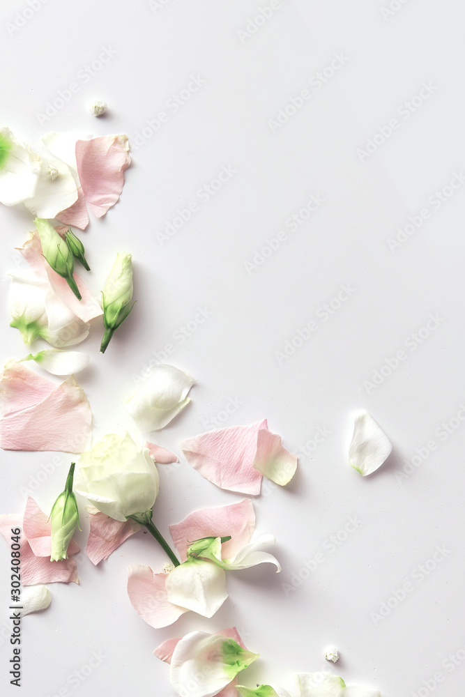 Fototapety, obrazy: Flowers composition. Rose flower petals on white background with copy space. Gentle petals top view