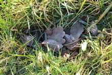 An Oak Leaf Lies Among Other Leaves And Pine Needles On The Floor In The Forest. Frost Kissed On A Cold Morning.