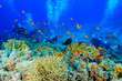 canvas print picture - Coral Reef at the Red Sea Egypt