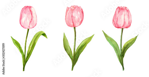 Photo  Pink tulip watercolor painting flower set on isolated white background hand pain