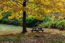 Picnic Table Under Colorful Au...