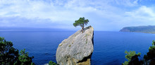 Panoramic View Of A Lonely Tree Growing On A Rock. Crimea