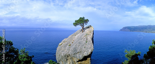 Obraz Panoramic view of a lonely tree growing on a rock. Crimea - fototapety do salonu