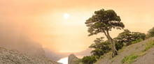 Panoramic View Of The Lonely Tree At Sunrise In The Fog. Crimea