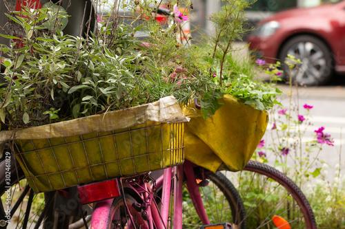 Natur in der Stadt - Rosa Fahrrad mit Kräutergarten Canvas Print