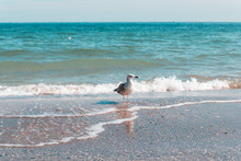 Seagull Portrait Against Seashore And Looking At The Camera On A Sunny Day. Beautiful Seascape