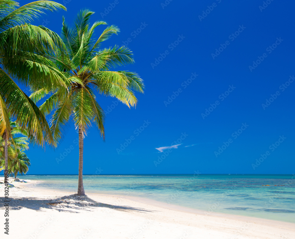 Fototapety, obrazy: beach and tropical sea
