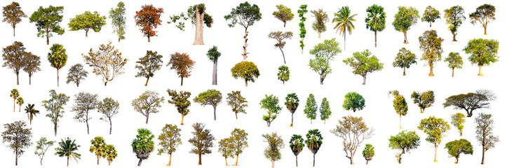 collection of tropical tree in thailand isolated on white background