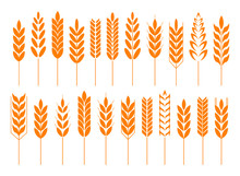 Cereal Grain Spikes Icon Shape...