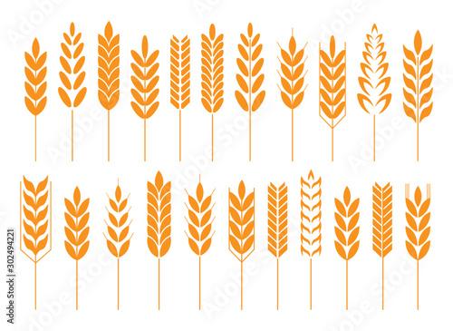 Obraz Cereal grain spikes icon shape set. Agriculture food logo symbol. Vector illustration image. Isolated on white background. Oat, whey, barley, rye. - fototapety do salonu