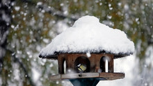 Songbirds On A Birdhouse In Wi...