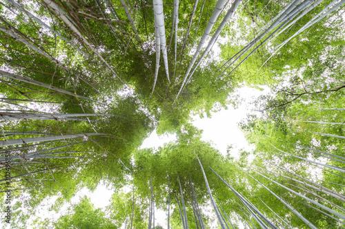 arashiyama-bamboo-groves