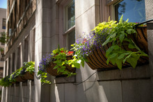 Row Of Planter Boxes On An Apartment Window Sill