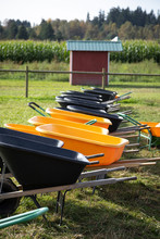 Row Of Wheel Barrows At A Pumpkin Patch