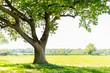 Leinwandbild Motiv tree
