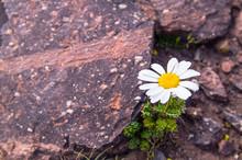 A Delicate Flower Frame Breaks...