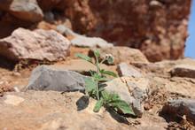 Single Wild Flower In Dry Sand...