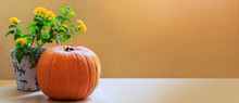 Thanksgiving Horizontal Banner - Pumpkin And Yellow Autumn Flower In A Pot Over Light Wood On Orange Background