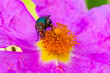 canvas print picture - Macro shot of a fly